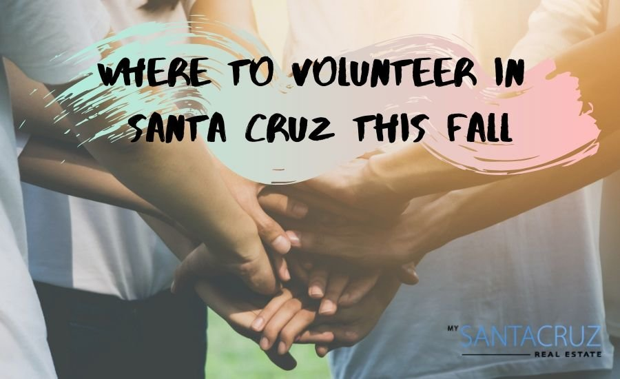 how to volunteer in Santa Cruz