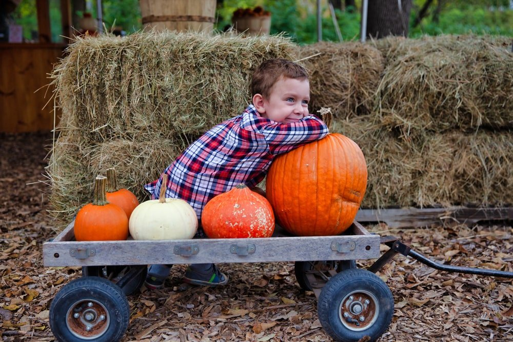 Boy at Santa Cruz Pumpkin Patch