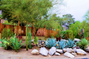 xeriscaping your yard