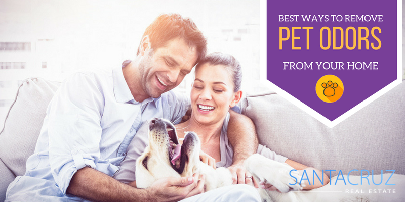 Remove pet odors from your home